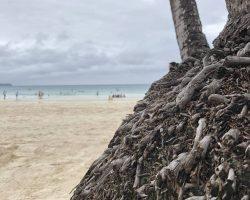 白沙滩上的老树根
