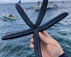 船上的小哥哥,什么都没有带,潜到水里抓到活的海星
