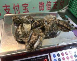在这里又单点的鲍鱼1250 peso一份,这里的鲍鱼没有壳,最后做的切片