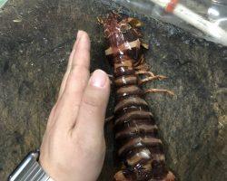 皮皮虾每一个都比我的手掌要大