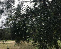 刚下完雨,带着露珠的树